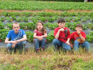 Strawberry Picking 2013